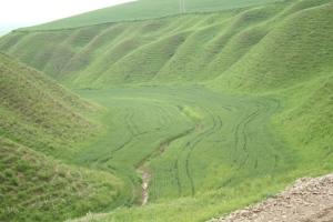 wheat fields in vallies near Khaled Nabi