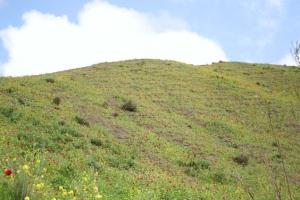 popy covered hills on last leg of gravel road to Khaled Nabi